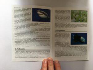 605. Memo Подводный мир# Underwaterworld (4)