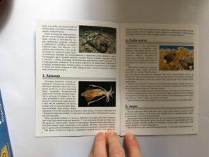 605. Memo Подводный мир# Underwaterworld (5)