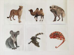 129. Animals