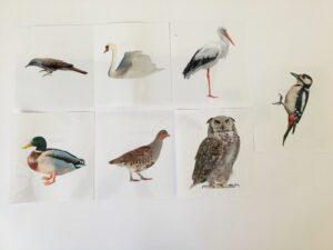 130. Birds