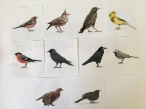 131. Birds