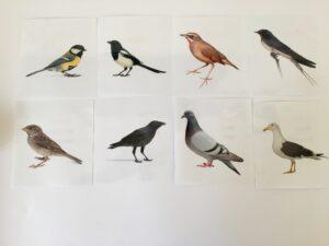 133. Birds