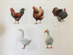 134. Birds