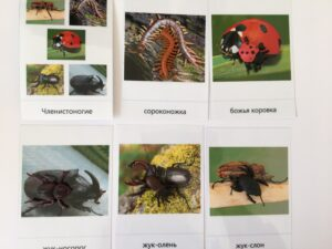 147. Insects (1)