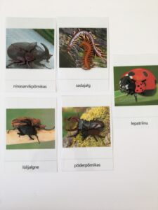 147. Insects (2)