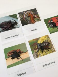 147. Insects (3)