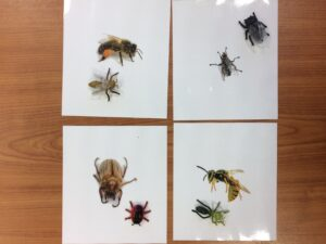 148. Insects (1)