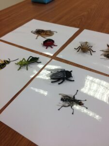 148. Insects (2)
