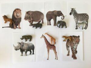150. Safari