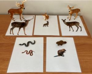156. Forest animals