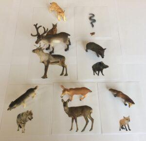 162. Forest animals